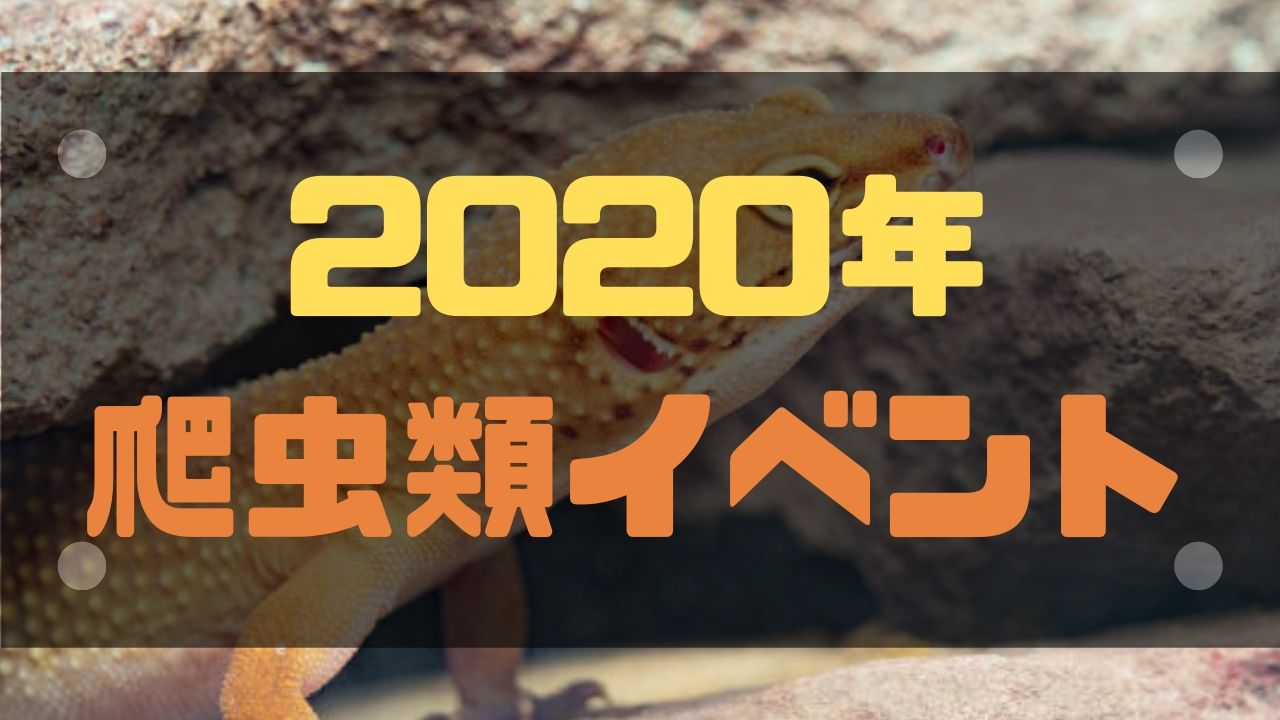ブラックアウト 爬虫類 2020